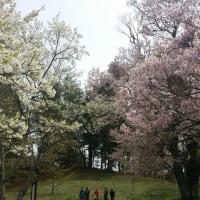 お花見弁当\(^-^)/