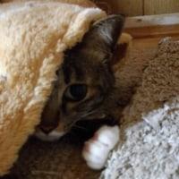 毛布のもっこりさんは誰?