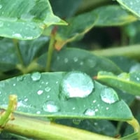 iPhoneで撮影(雨バージョン)