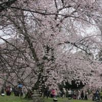 桜のワルツ