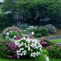 170625 小林真央さんの死、華やかな人生、前向きな人生、悲劇的な人生!!
