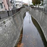 妙正寺川を歩く2
