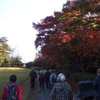 森林公園・植物園ウォーキング