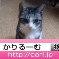 2016/10/17(17:50:44) 猫S正面写真