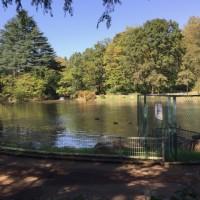 パンパスグラス・公園の池ほか