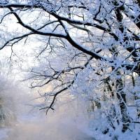 厳寒の樹氷
