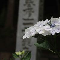 花の御寺 長谷寺へ
