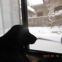 雪見してます