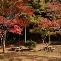 最後の紅葉~天野山金剛寺とキャンプ場