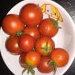 トマト泥棒はカラスだった
