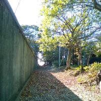 【好きなものたち】葉山をふりかえる(1)
