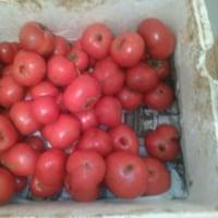 小西農園さんのトマト解禁(*^-^*)