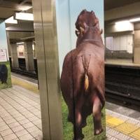 大阪  動物園前から