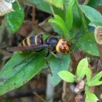 水滴とスズメバチ