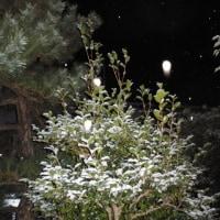 雪景色の庭で ~ オーブ写真集・Old Photos (9)