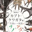 カブト・クワガタ展~ツノとアゴ編~本日より開催!