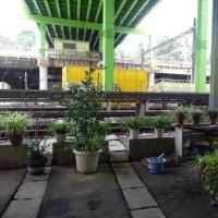 鉄コンクリート環境の中の緑 la verdure