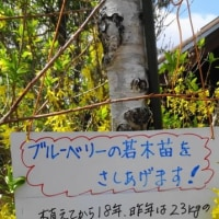 八ヶ岳の24節季72候 遅い春(追伸)