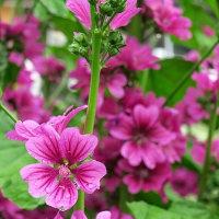 雨に濡れる花たち in 岡山・倉敷市