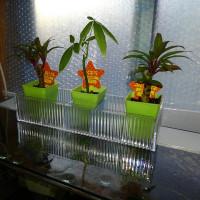 重し代わりの観葉植物