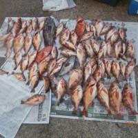 船釣りひさしぶりの大漁