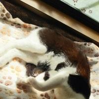猫は寝子なんですって