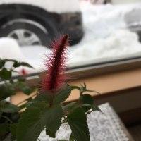 2日続きの10㎝オーバーの雪、気持ちが雪に押し潰されない様に…