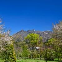 阿蘇山麓の 桜と 山野草 ~ バッチシ愛でることが 出来ました。