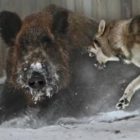 震災後のさばる野生動物たち