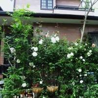 バラの季節=ただただ、幸せだなぁ~~と。。。。。