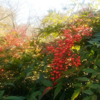 秋の寒さと温暖と/大谷&真央ちゃん
