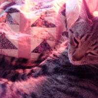 猫眠り わが家ニッ=^▼^=平和 やってくる