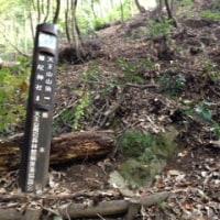 山林作業のための作業道視察