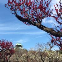 大阪城公園梅