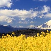 富士山と・・