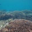 柏島ダイビング情報