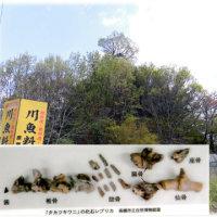 高槻 まちかど遺産北部地区(^^♪No9「タカツキワニ」化石の発見地