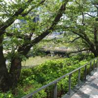 快晴の東京ガーデンテラス:弁慶濠テラスとオフィス・ホテル入口 PART1
