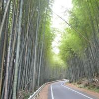 まち歩き西0113  竹の道  西京区・大枝  山陰街道付近