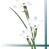 藤木稟 「バチカン奇跡調査官④ 千年王国のしらべ」