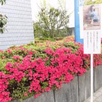 岩崎宏美コンサートツアー Hello!Hello!