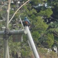 珍しい鳥を見つけました