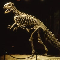 1993年のニュージーランド研究旅行 その36 カンタベリー博物館