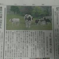 中日新聞掲載のモォちゃん☆