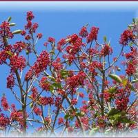 加古大池の植物たち