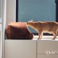 猫の特殊能力?!