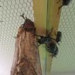 昆虫の森展  7月16日から  さんちかホールで開催中