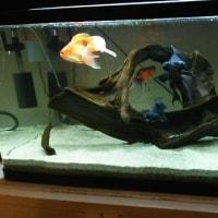 金魚ちゃん⤴✨😆