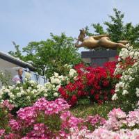 2017 信州なかのバラ祭り・850種2500株 咲き誇る一本木公園