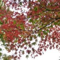 壽堂日記28年11月23日「肩こりと胃炎は関係がある?」